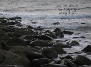 alive with stillness