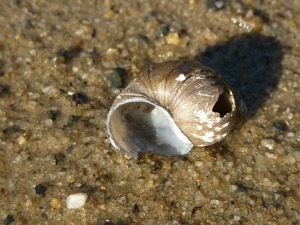 broken shell 2