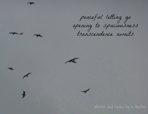 gulls - Copy
